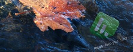 "Insights flow ""like leaves on a river"" - David Bohm"